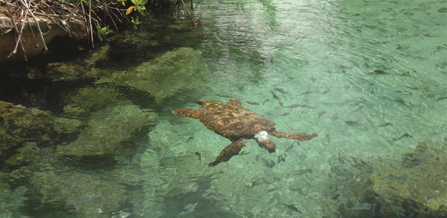 Temporada de Tortugas en Fairmont Mayakoba