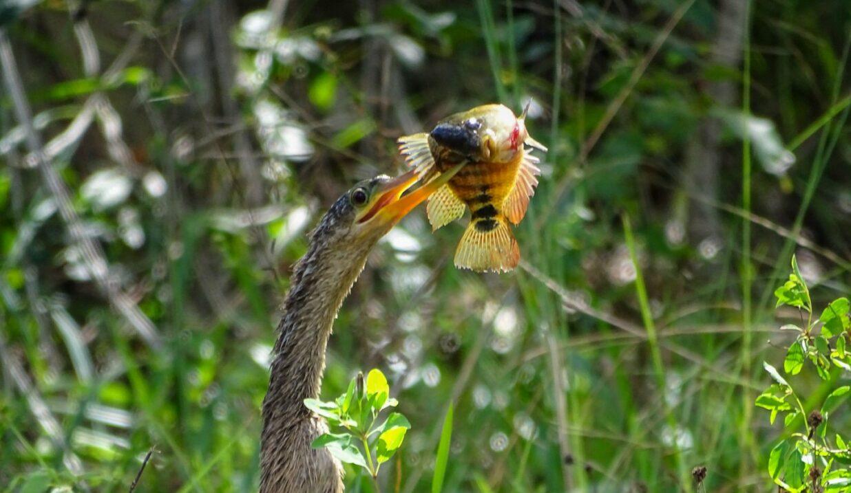 The Birds of Mayakoba