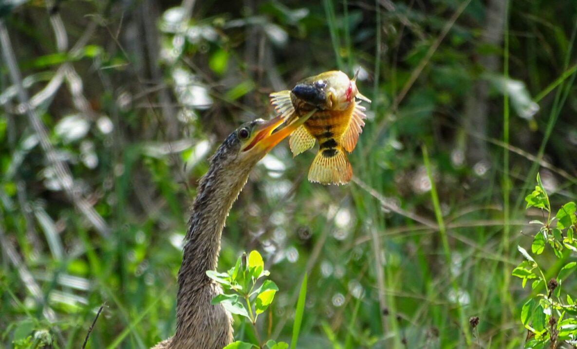 Las Aves de Mayakoba