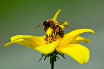 Creando un entorno próspero para las abejas Meliponas