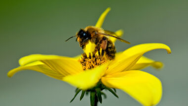 Creating a thriving environment for Melipona Bees